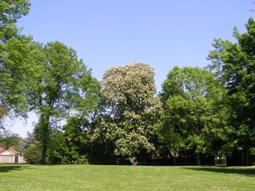 Le Parc, avec un marronnier en fleur